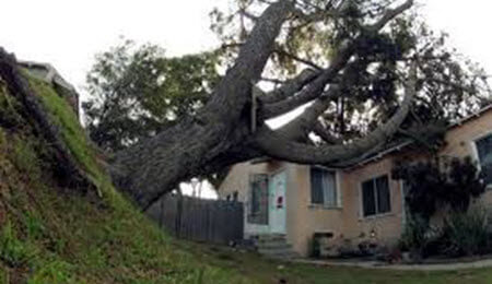 Tree damage on house insurance